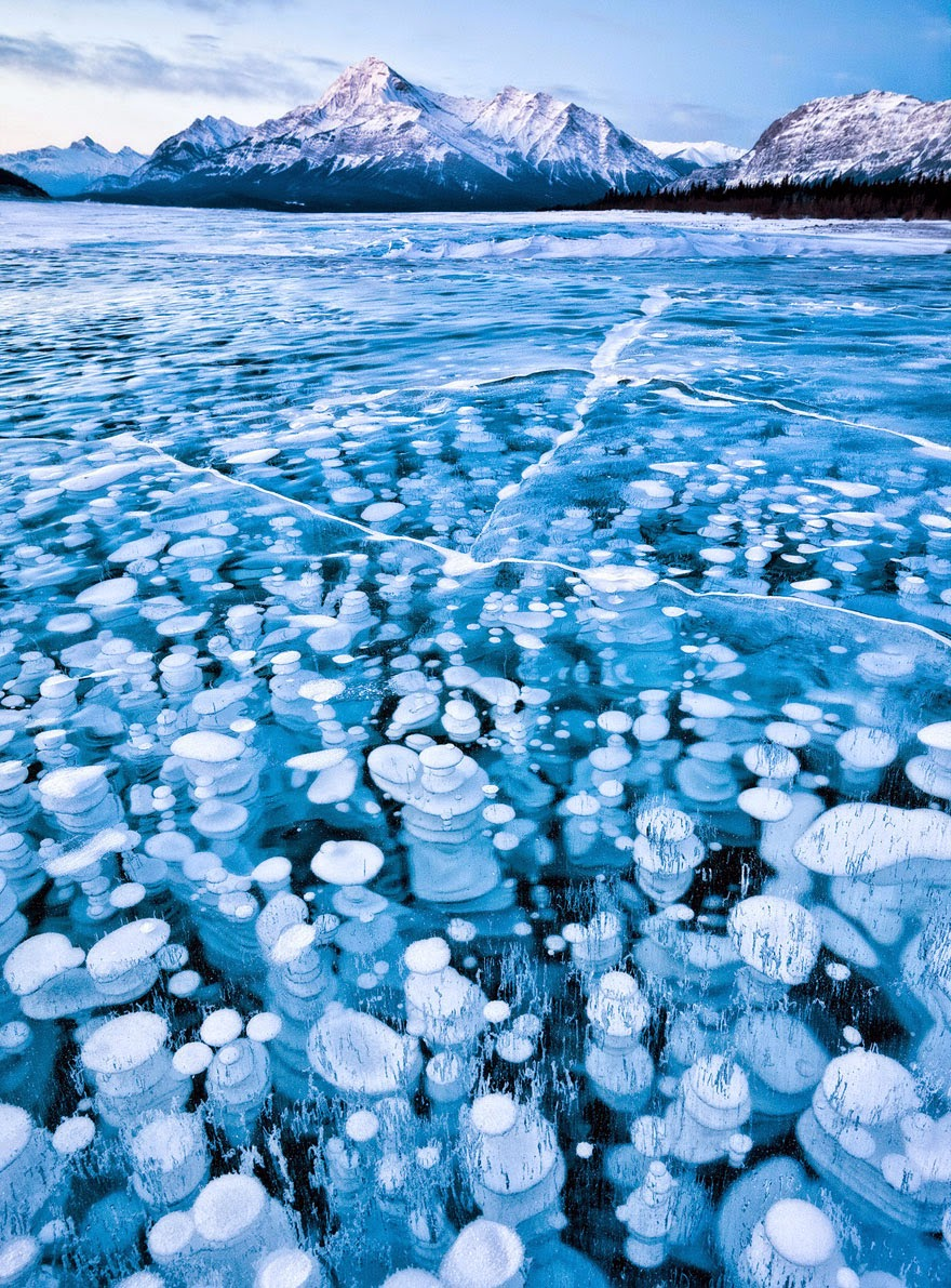 Bubbles Under The Ice Of Abraham Lake, Canada
