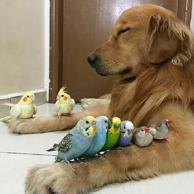 dog-hamster-and-birds-