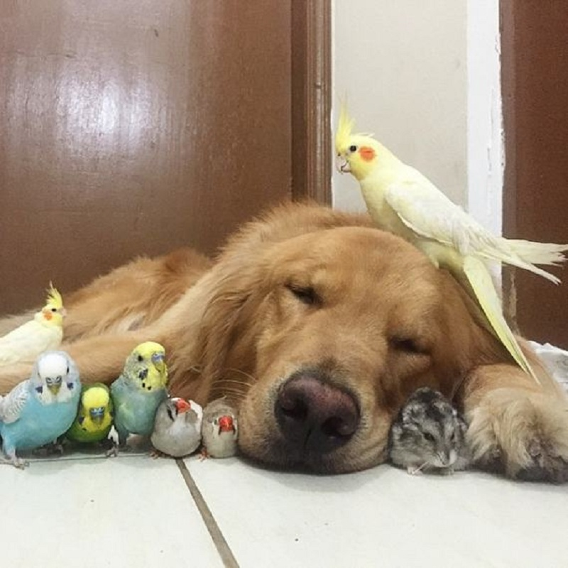dog-hamster-and-birds-1