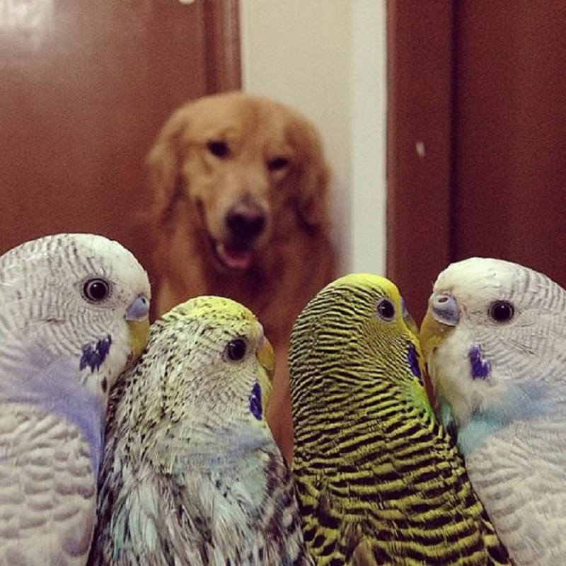 dog-hamster-and-birds-13