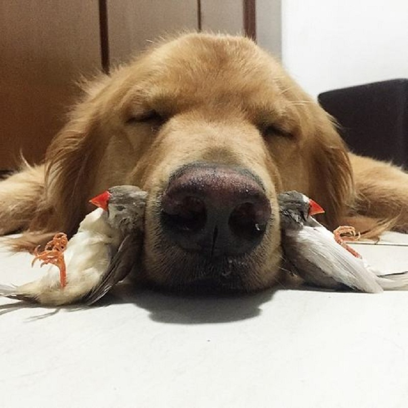 dog-hamster-and-birds-17