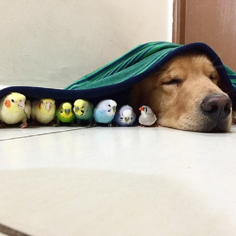 dog-hamster-and-birds-18