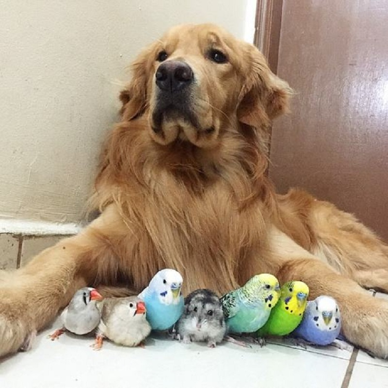dog-hamster-and-birds-19