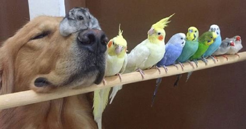 dog-hamster-and-birds-20