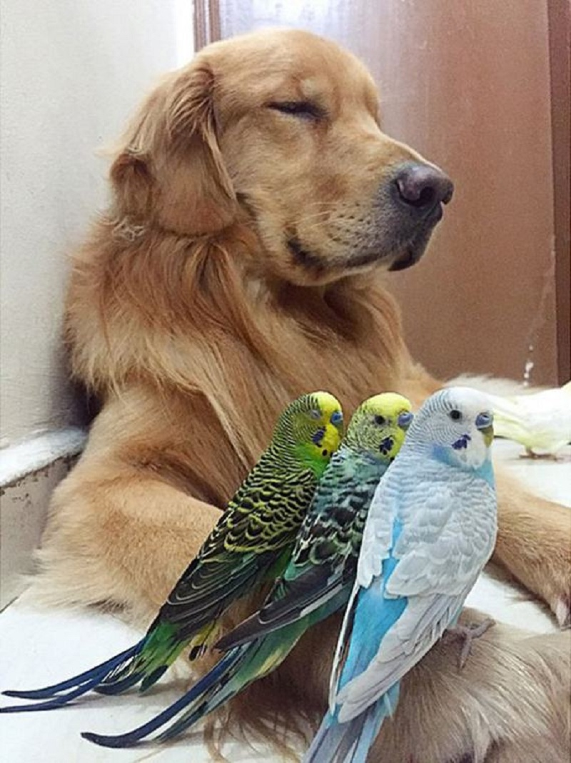 dog-hamster-and-birds-4