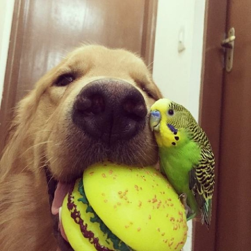 dog-hamster-and-birds-9
