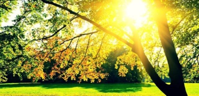 soncevo lisja suma2
