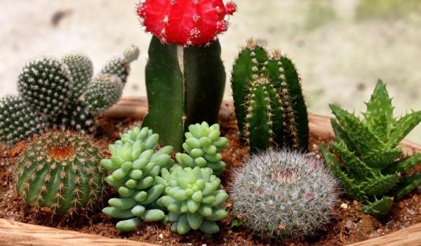 cactus-pot1