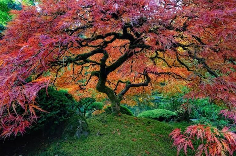 drvo za cover