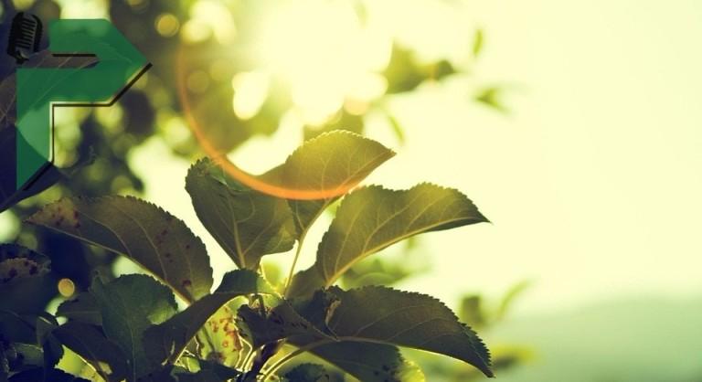 meteo soncevo prolet novo (1)