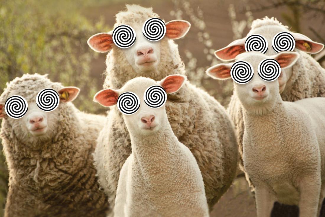 ovci naduvani