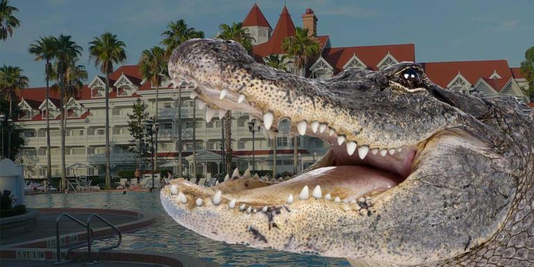 aligator dete