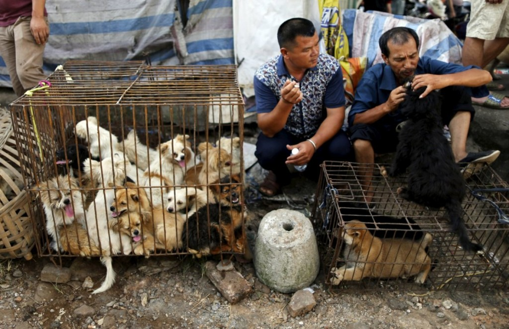 china-dog-meat-festival (1)
