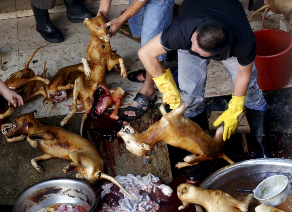 china-dog-meat-festival (2)
