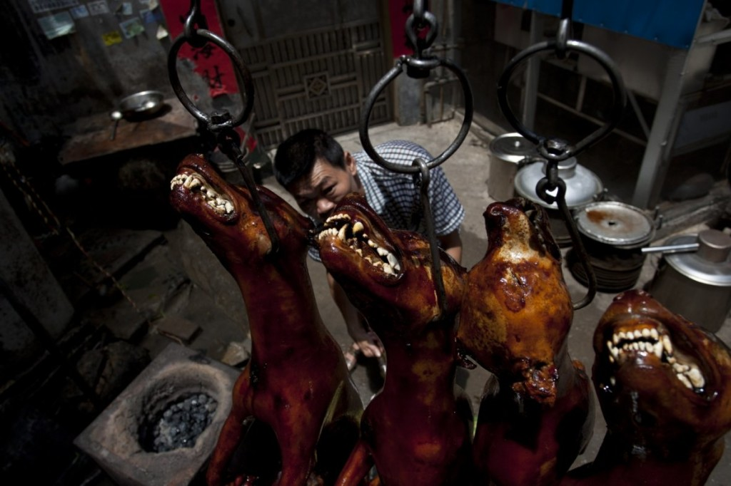 china-dog-meat-festival (3)