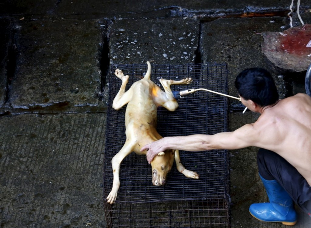 china-dog-meat-festival (4)