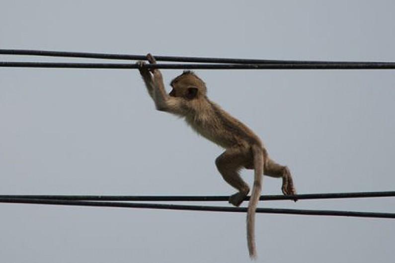 majmun elektricna energija