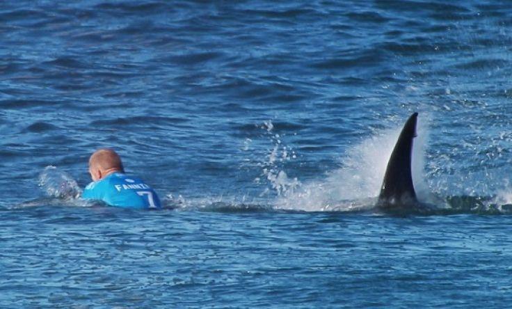 surfer ajkula