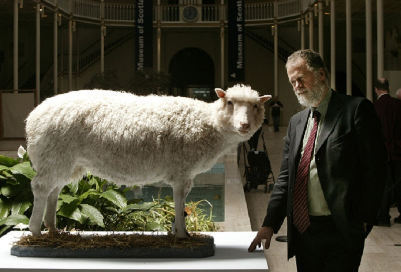 doli kolonirana ovca muzej