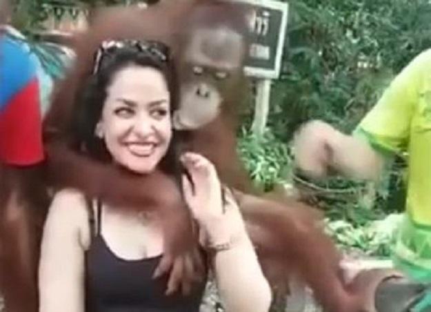 orangutan Tajland