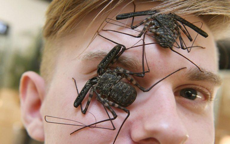 insektenzuechter-adrian-kozakiewicz