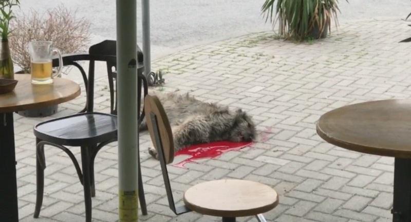 kuce ubieno skopje