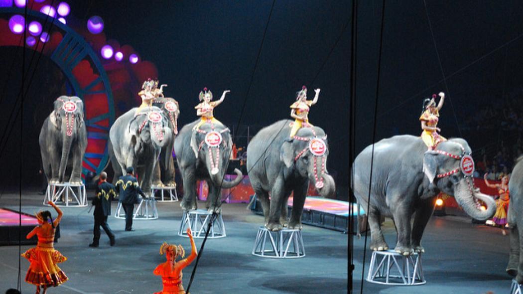 cirkus slon